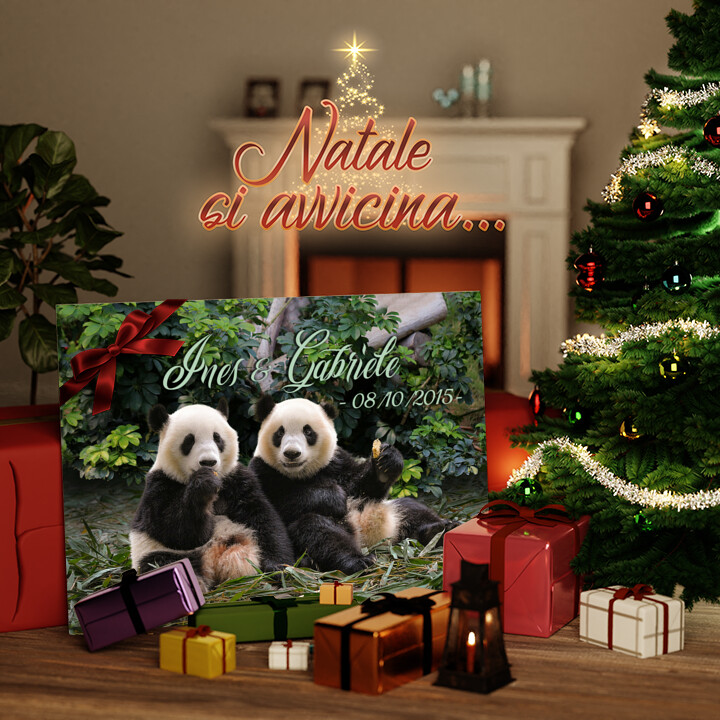 Tela Regalo Orsi panda